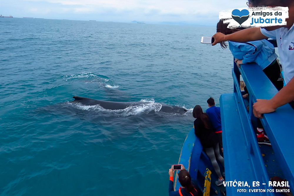 Baleia-jubarte se aproxima de barco com turistas em Vitória-ES
