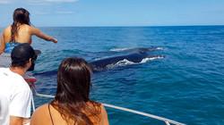 Turistas com Baleia