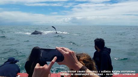 Relato da saída do dia 08/09/2017 - Natura Ecoturismo e Jubarte Safari