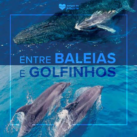 Livro: Entre Baleias e Golfinhos