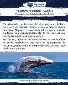 Espírito Santo: Um Lugar Cheio de Biodiversidade Marinha