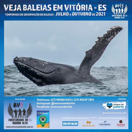 Aberta a Temporada de Observação Turística de Baleias 2021
