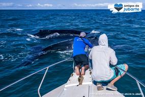 Amigos da Jubarte registram o canto das baleias em Abrolhos.