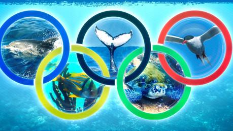 O Concurso Fotográfico Olimpíadas dos Bichos já possui seus ganhadores!