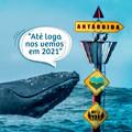 Chega ao fim a temporada turística de observação de baleia-jubarte 2020 no ES.