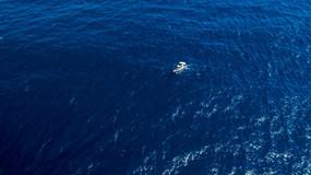 Será uma nova espécie de baleia-de-bico?