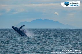 Eu ouvi dizer baleias-jubarte no município de Serra?