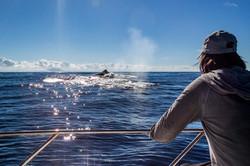 Turista Observando Baleia Jubarte