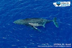 Como as Baleias Amamentam seus Filhotes no Fundo do Mar