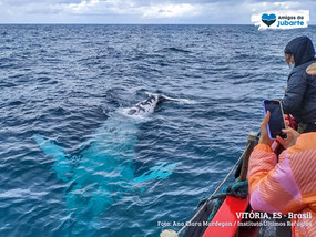 Aventura em alto mar: um passeio ao encontro das baleias-jubarte no litoral capixaba