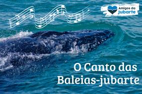 O canto das baleias-jubarte