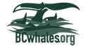 bc whales logo 2.png