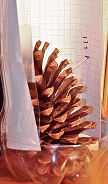 Hygrometer pinecone