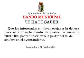 Bando Municipal 21-10-2021 ovejas.jpg