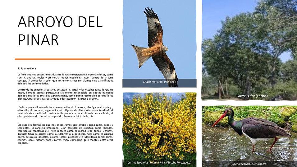 Arroyo del Pinar 006.jpg