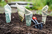 Fundraising- money planted in the ground