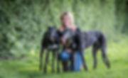 Greyhound Boarding Specialist