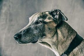Greyhound boarding