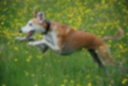 Greyhound holiday kennels