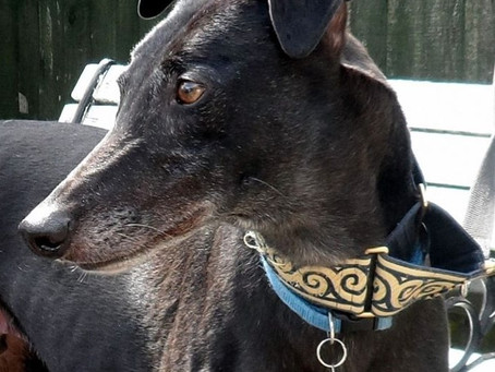 Chopper's Story - the Diary of a Rescue Greyhound