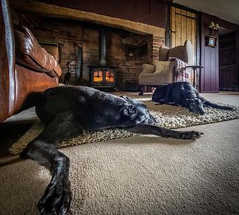 Greyhound Expert