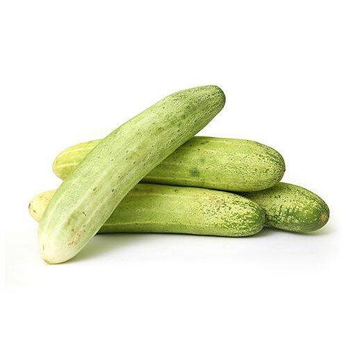 Fresho Cucumber/ Khera