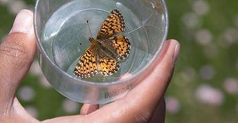 Butterfly Kevin Bacher NPS.jpg