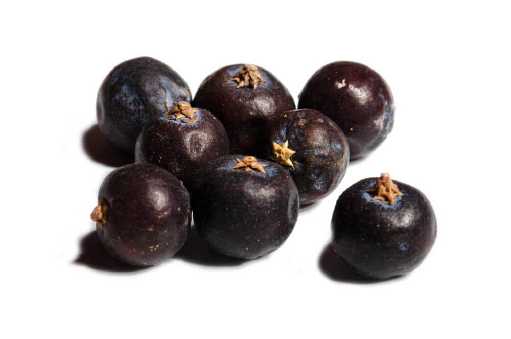 Wachholder Beeren, italienische Riesen, dunkel violett