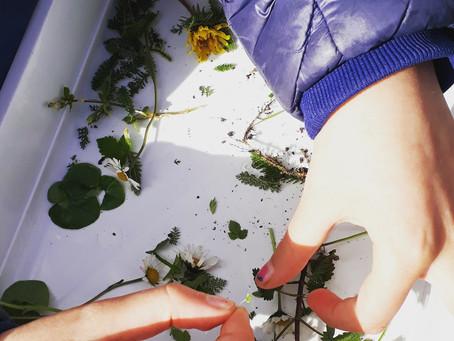 Eetbare planten zoeken