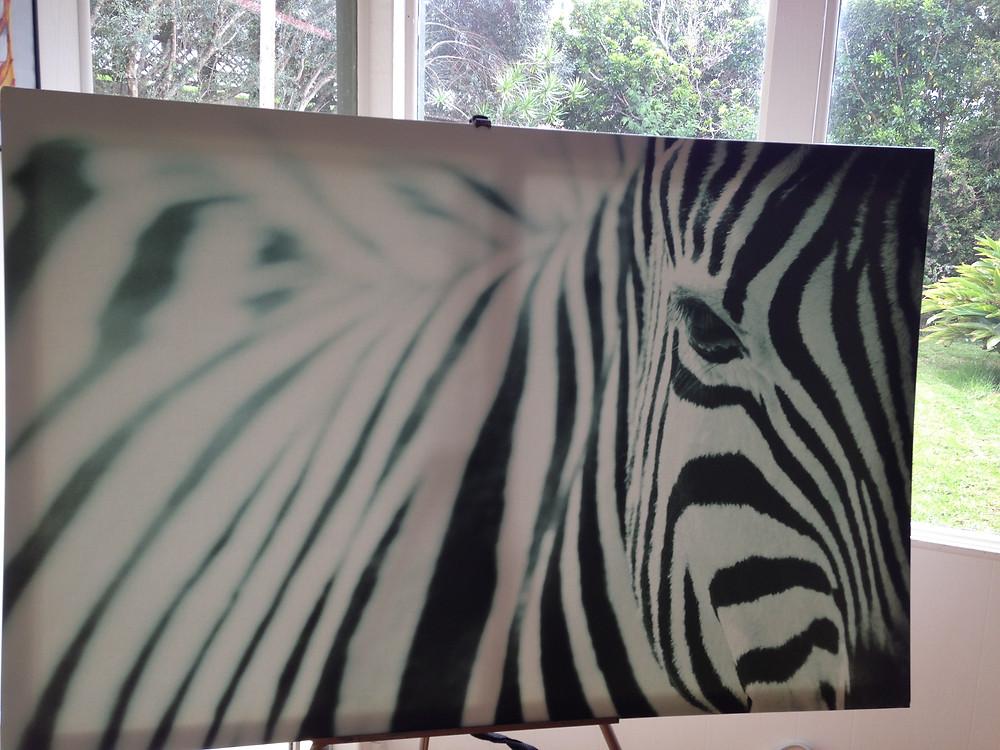 Porcelain Ocean Mr. IKEA Zebra