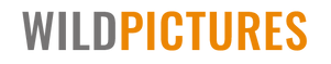 wildpics-media-web-logo-July-21-1.png