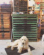 #printshopdog ❤️.jpg