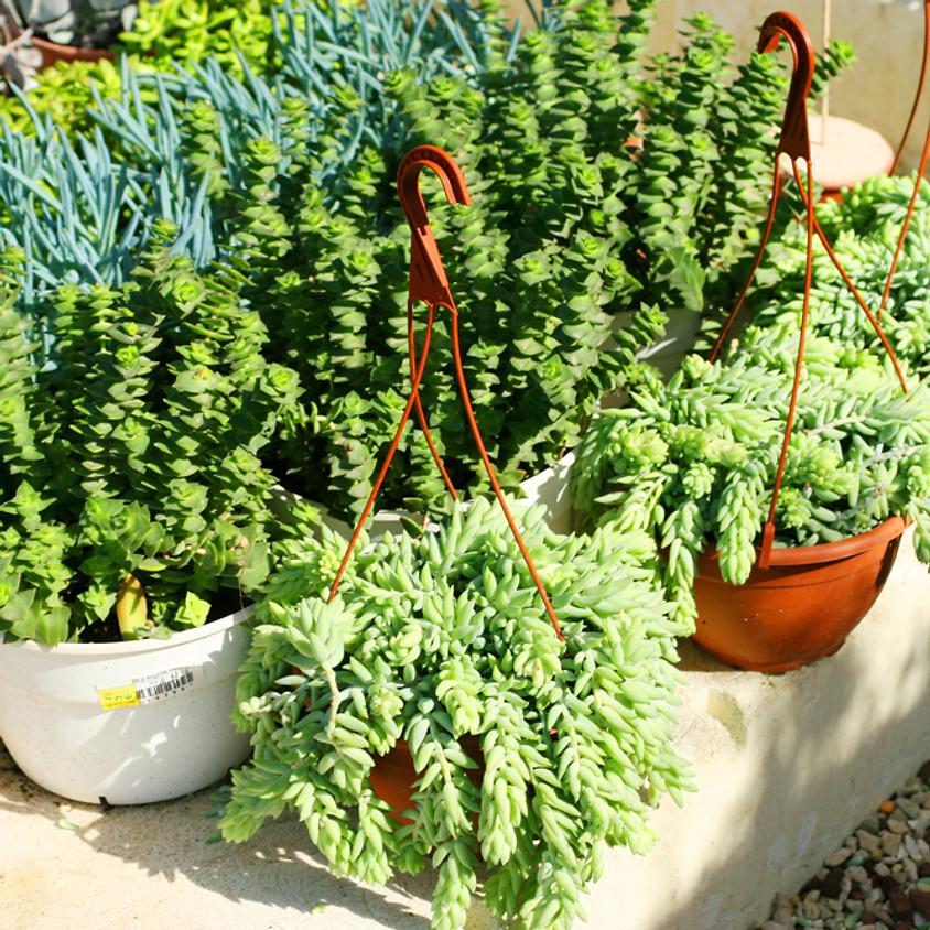 Potton Show Plant sale