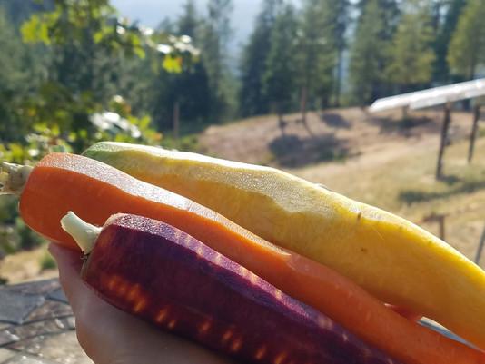 Got Carrots?