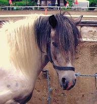 Pferd_Shakira Putzplatz.jpg