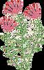 rosalangeBlumen.png