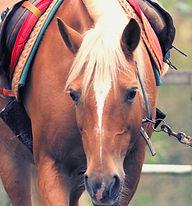 Pferd_Lilly.jpg