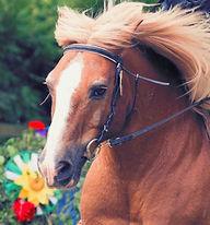 Pferd_Markant Kindertunier.jpg