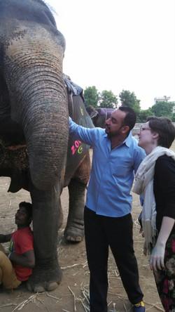 Jaipur Elephants Paiting