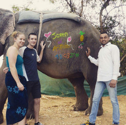 Jaipur Painting Elephants