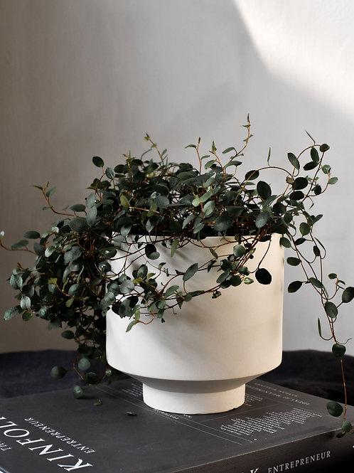 KIABY Pot