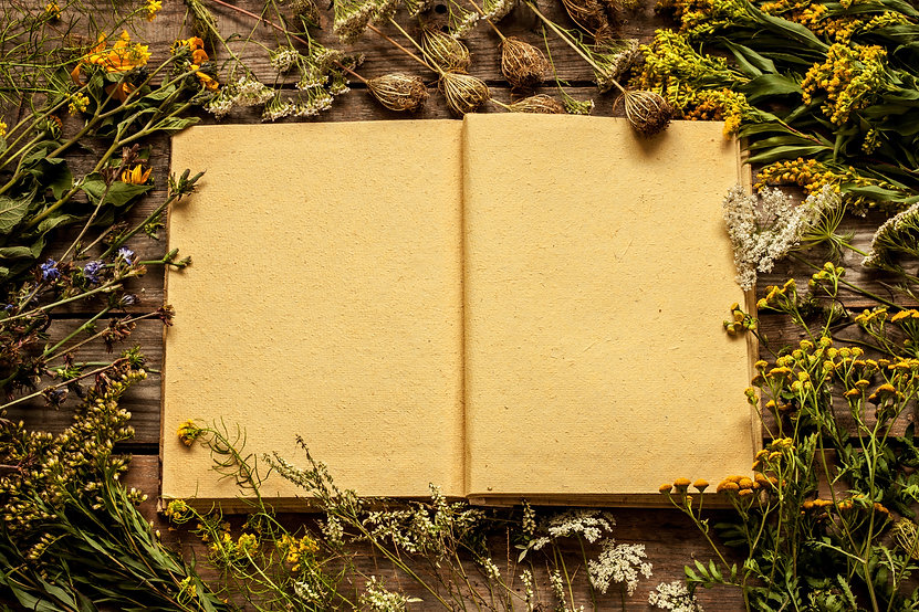Blank opened book with late summer natur