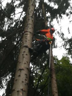 Unser Chef auf dem Baum