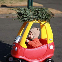 Lions Christmas Trees.jpg