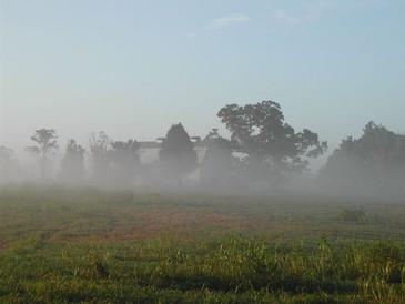Ground fog 1