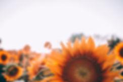 bloom-1866760.jpg