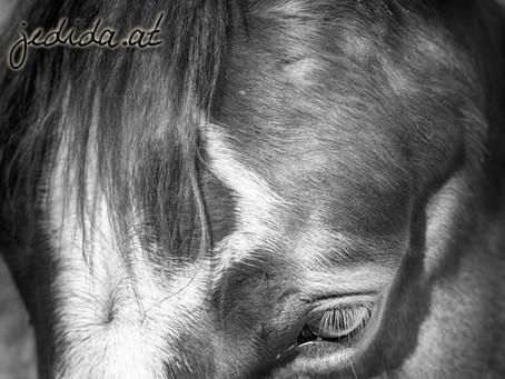 HORSES #black and #white