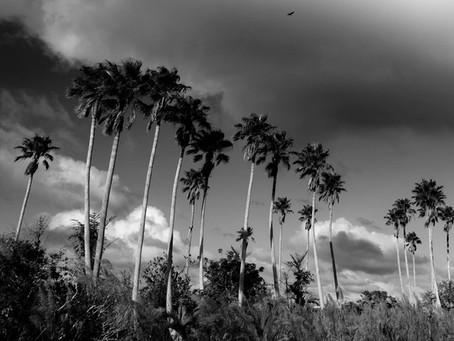 Reiseblog – Florida Keys