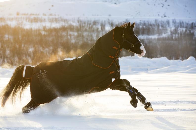 Couverture HORSEWARE Amigo bravo 12+