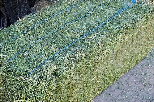 Alfalfa 1st Cutting - 3-String Square